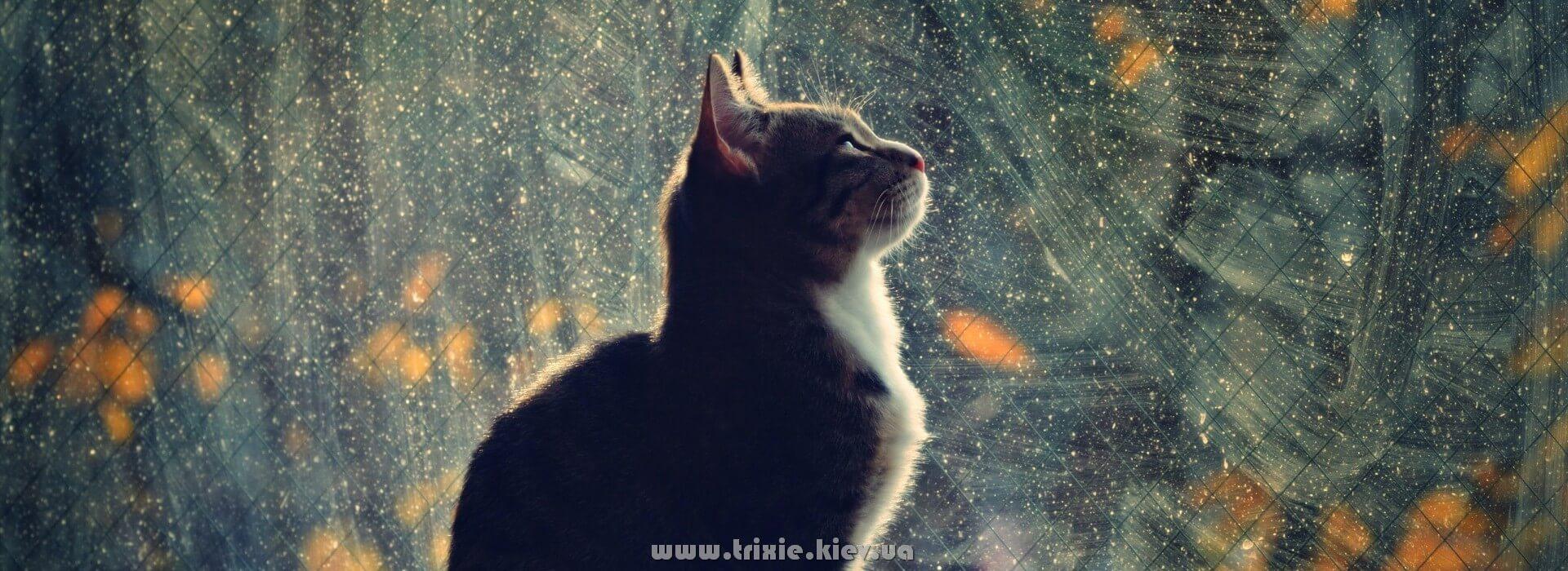 Каждый кот и кошка уважает Trixie, за непревзойденное качество товара по столько низкой цене