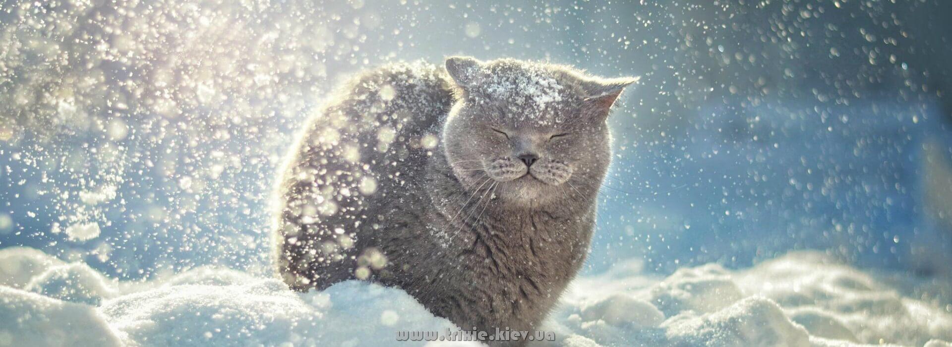 Снег и мороз не преграда, когда есть Одежда для собак и кошек Trixie