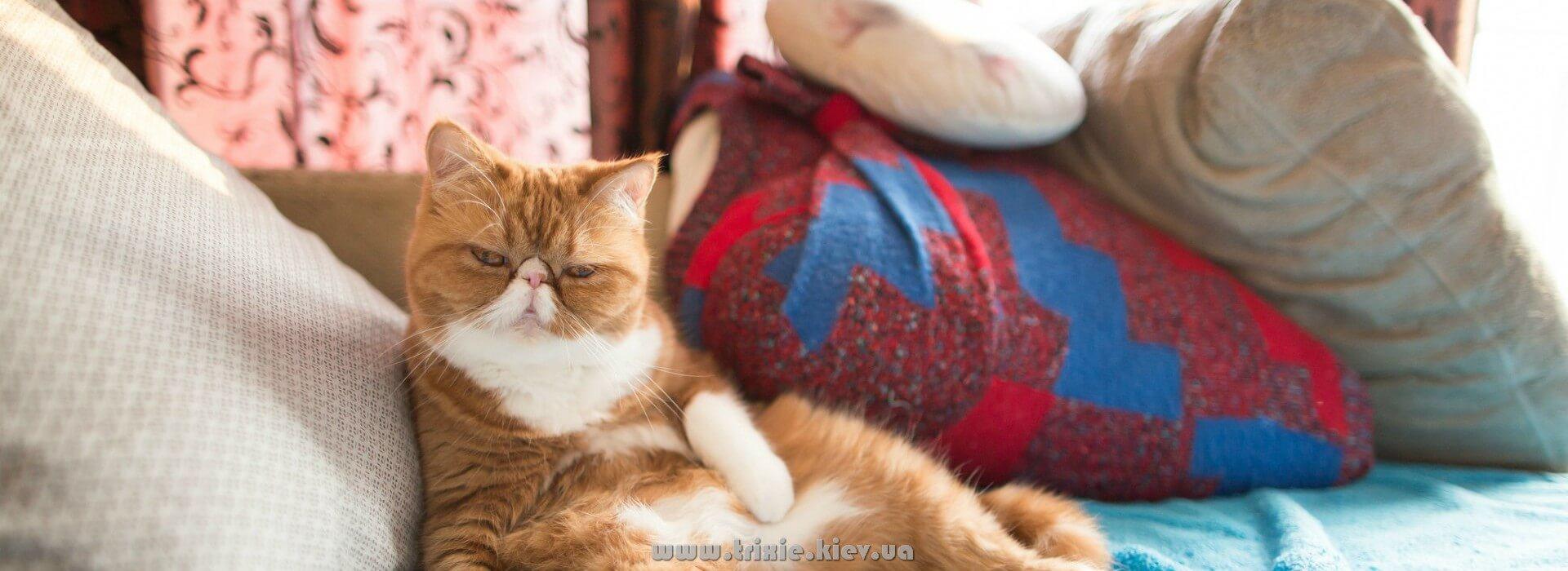 Доставка зоотоваров Новинки Trixie для кошек и собак по всей Украине - отправляем с Киева