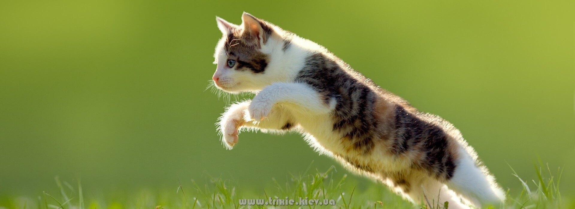 Кошка будет прыгать от радости - получив подарок от Trixie Украина