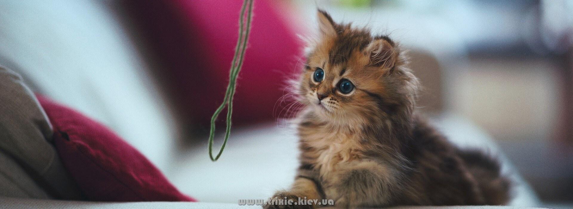 Лучшие качественные изделия для кошек торговой марки Трикси в Киеве