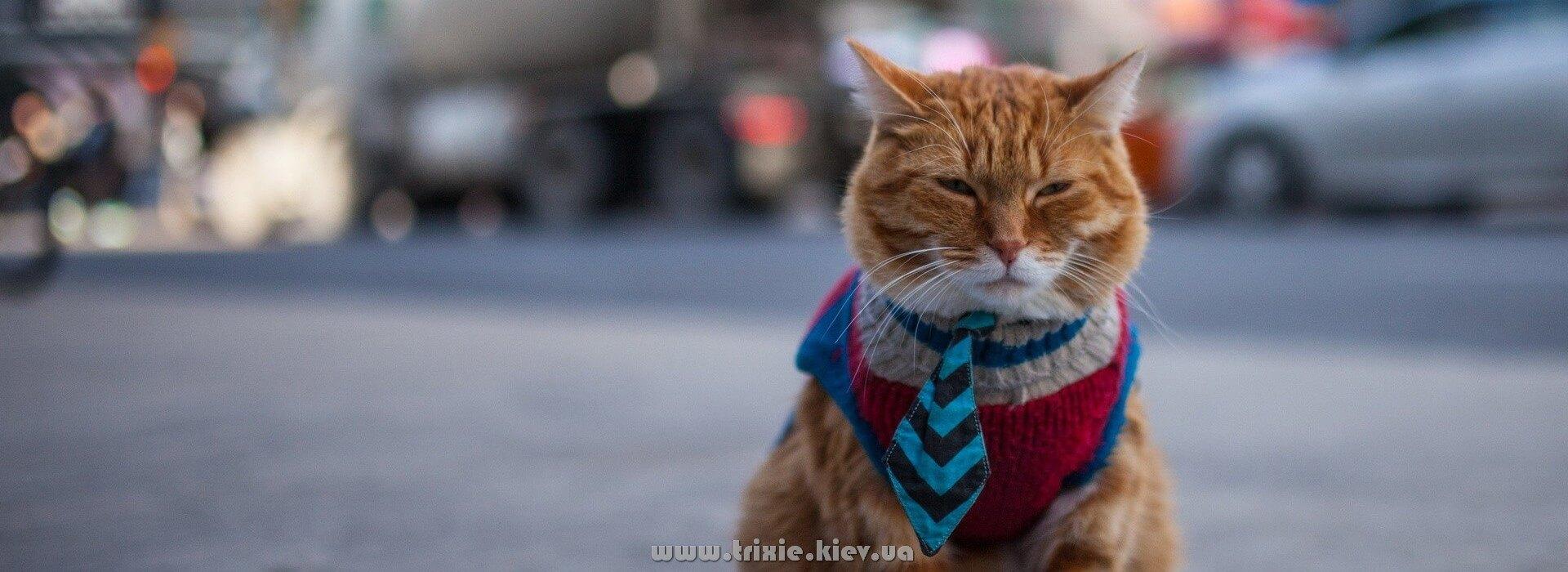 Купить в Киеве одежду Новинки Trixie для кошек и собак - доставка по всей Украине