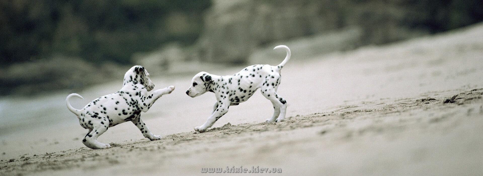 Зоотовары Trixie для собак и щенков - лучшая цена в Киеве и Украине