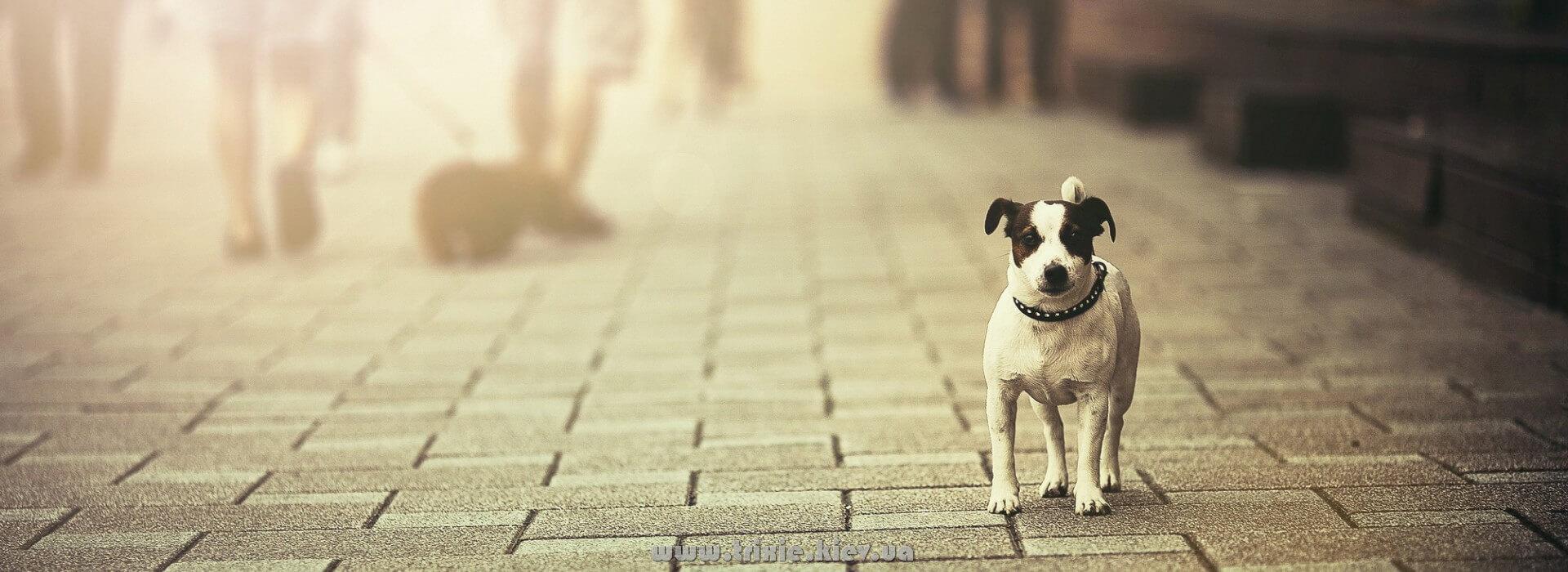 Trixie для щенят и взрослых собак, большой каталог зоотоваров в Киеве