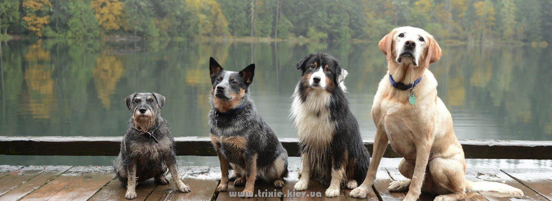 Большинство собак выбирает качественные зоотовары Trixie в Украине именно у нас =)