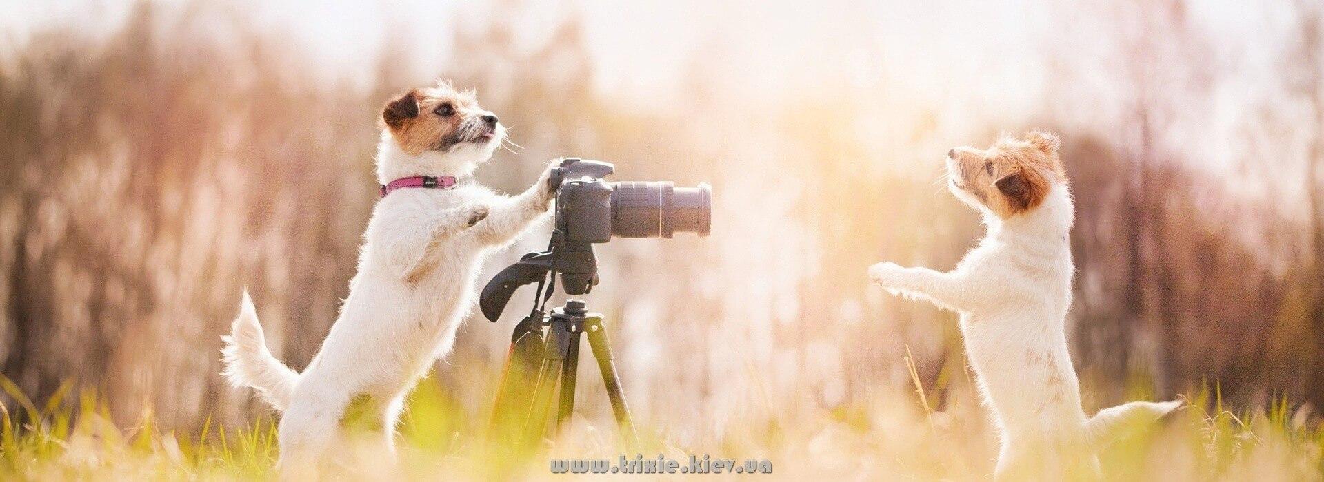 Каталог с фото зоотоваров для собак Трикси