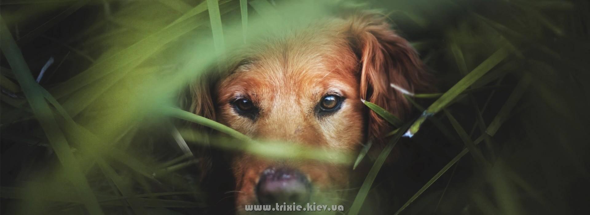 Товары для собак Трикси в Украине - это непревзойденное качество по справедливой цене