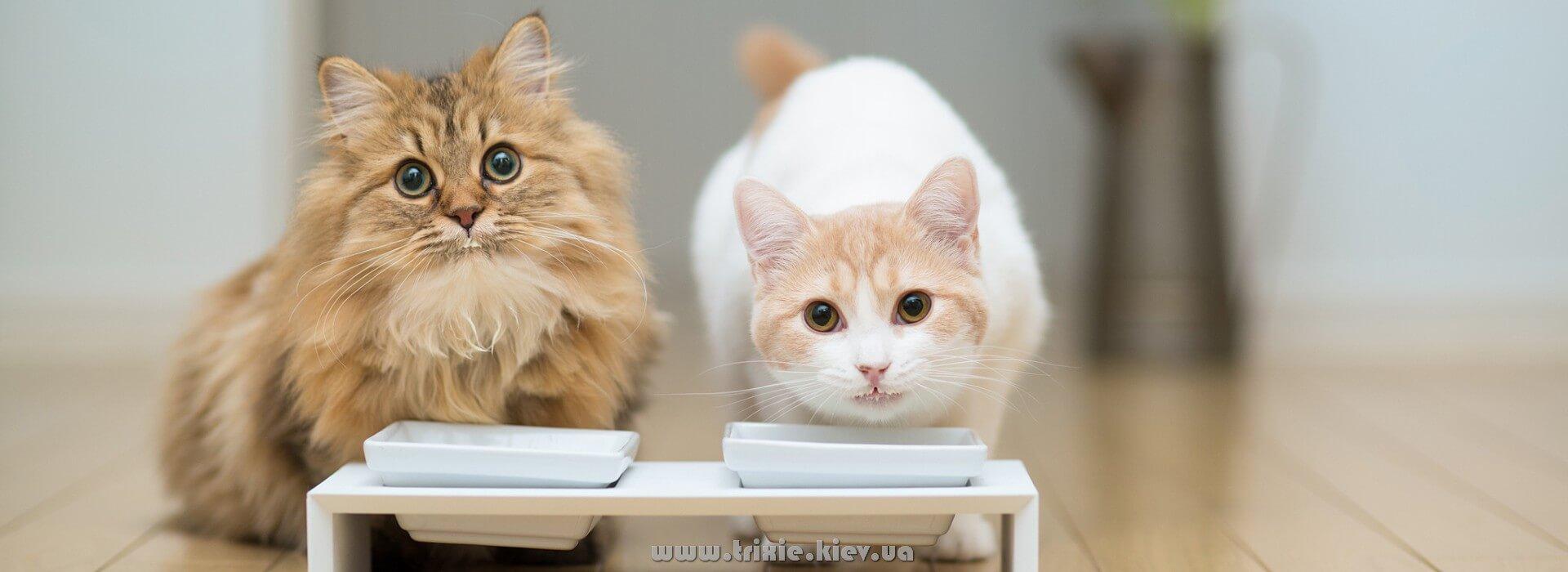 Милые кошки Дейзи и Ханна любят зоотовары торговой марки Trixie