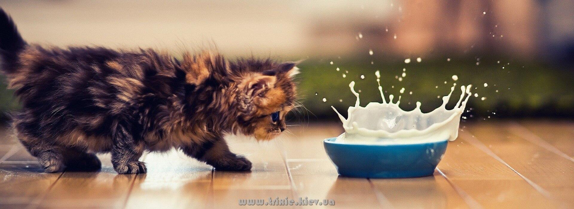 Товары Trixie для любимых котят