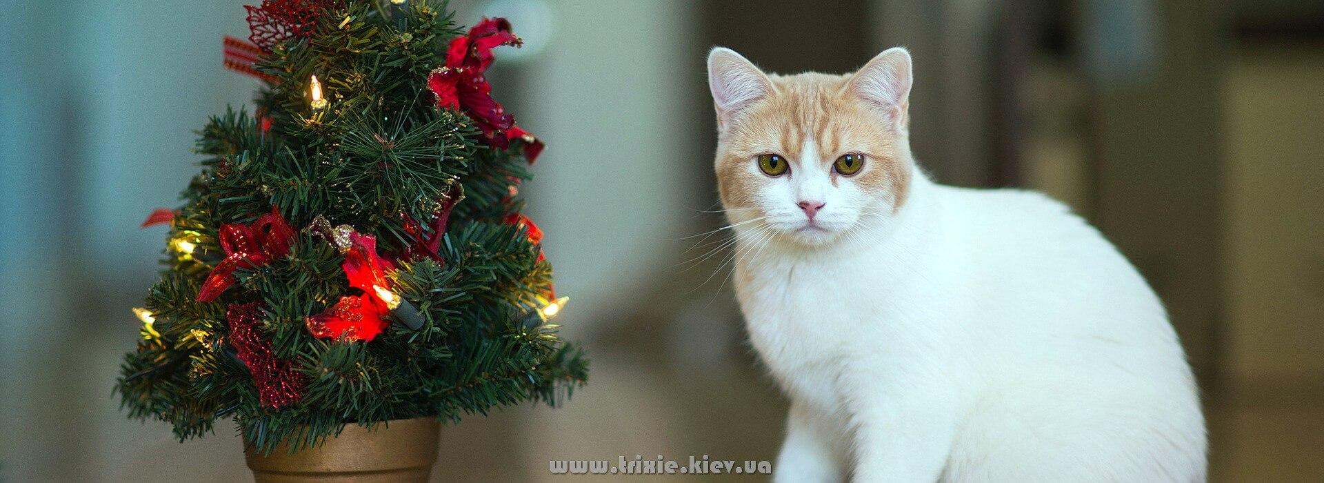 Лучший подарок для кошки на новый год - это игрушки от Trixie