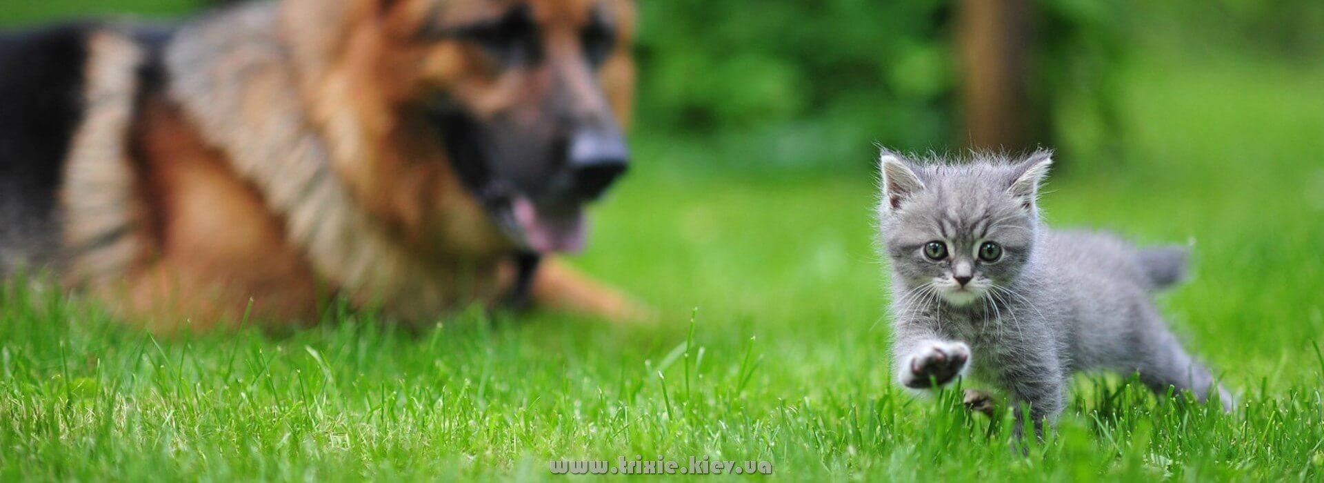 Зоотовары Трикси из Германии - это лучшие зоотовары в Украине для собак и кошек