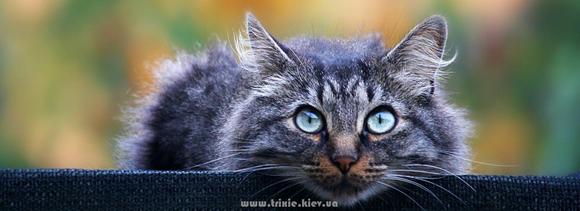 Доставка зоотоваров Trixie для кошек по Киеву и Украине